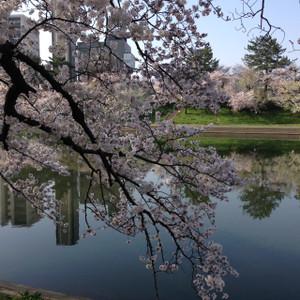 Sakura312