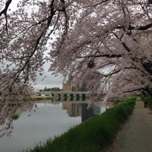 Sakura0201