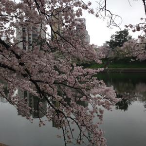 Sakura032